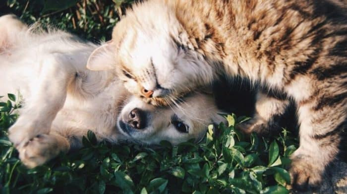 best cbd for dogs pets