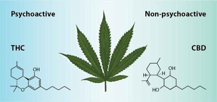difference between cbd and thc