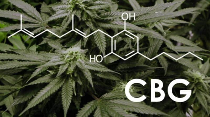 What You Should Know About CBG (Cannabigerol)