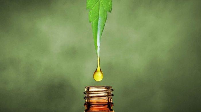 CBD Oil in Oregon