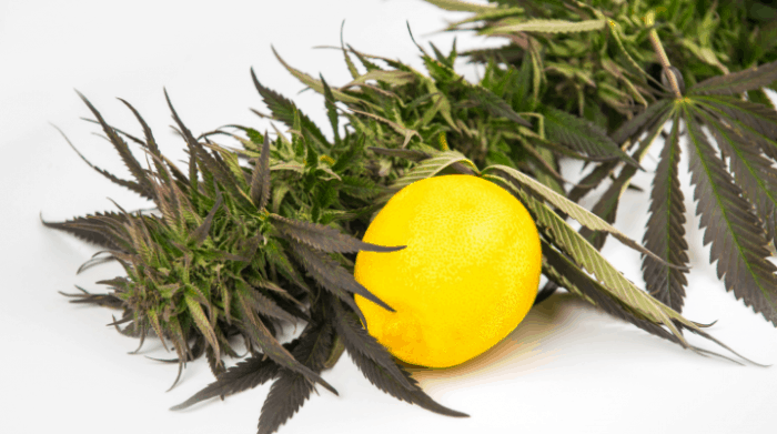 Cannabis and terpenes