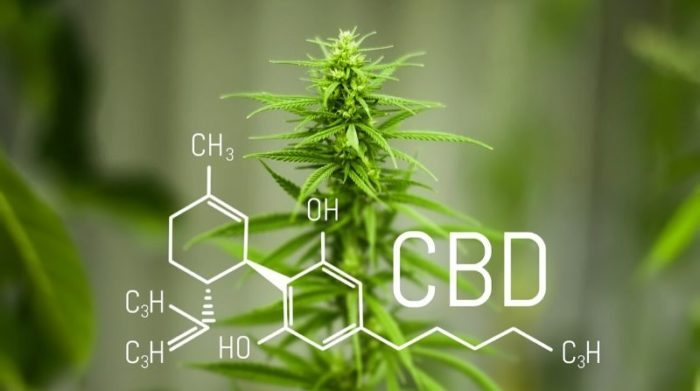 CBD Dosage: How Much to Take?