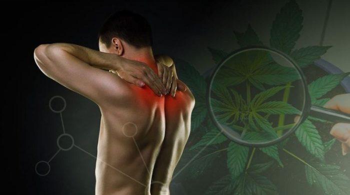 best cbd oil for sciatica
