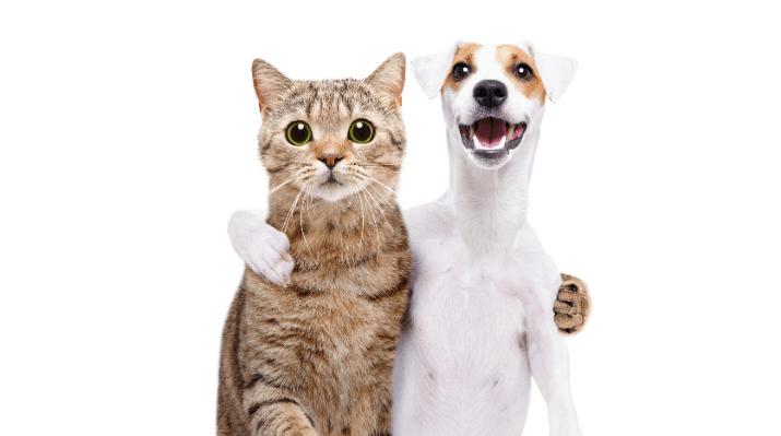 Best CBD For Pets (2021 Lineup)