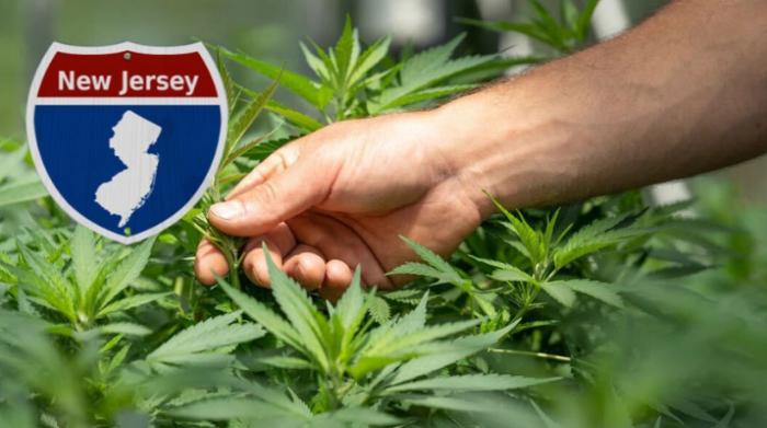 New Jersey Homegrown Cannabis Legal Battle