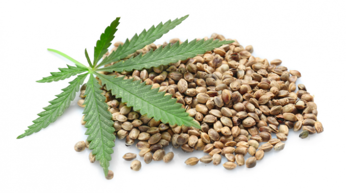 Different types of cannabis seeds