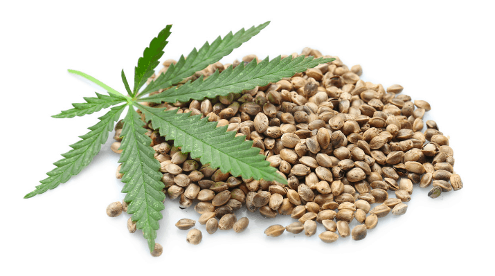 The Different Kinds of Cannabis Seeds