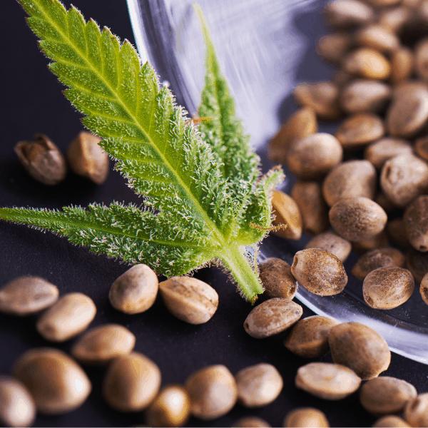 marijuana seedbank deals